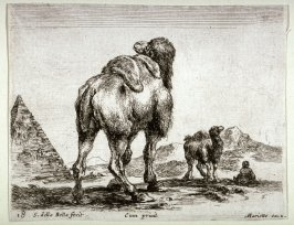 Camels and a Pyramid, from the series Diversi Animali