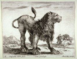 Standing Lion, from the series Diversi Animali