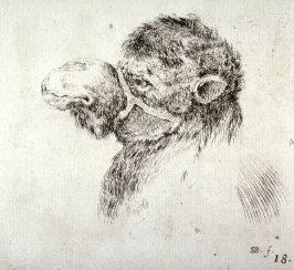 Head of a Camel, from the series Recueil de Diverse Pièces Servant À L'Art de Portraiture