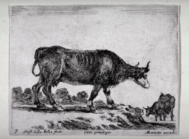 A Cow, from the series Diversi Animali