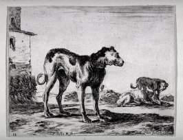 Three Dogs, from the series Diversi Animali