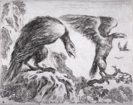 An Eagle with its Baby, from the series Diversi Animali