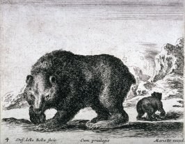 Bears, from the series Diversi Animali
