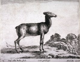 A female goat, from the series Diversi Animali