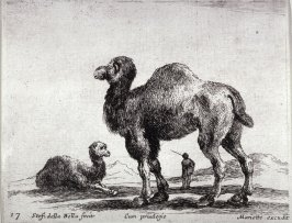 Camels, from the series Diversi Animali