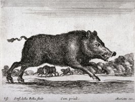 A Boar, from the series Diversi Animali