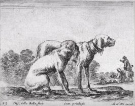 Two Hunting Dogs, from the series Diversi Animali