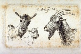 Three studies: goats and rams