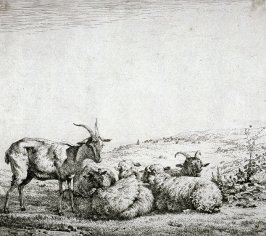[Sheep and goats in a landscape]