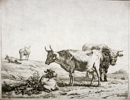 [Cows and bulls in a landscape]