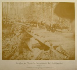 Logging at Vance's, Humboldt Co.