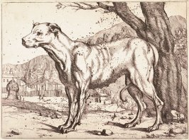 A Dog in a Landscape