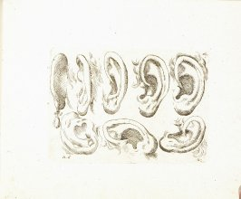 Eight Ears, Plate 6 from In vero modo et ordine per dissegnar tutte le parti et membra del corpo humano (Venice: Bassano, [printed after 1709])