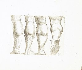 Four Legs and Feet, Seen from Behind, Plate 31 from In vero modo et ordine per dissegnar tutte le parti et membra del corpo humano (Venice: Bassano, [printed after 1709])