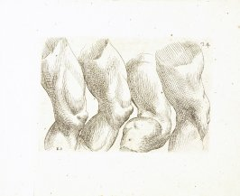 3/4 Views of Legs, of which Two Are Seen from Behind, Plate 35 from In vero modo et ordine per dissegnar tutte le parti et membra del corpo humano (Venice: Bassano, [printed after 1709])