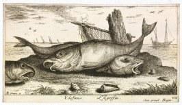 Edefinus, L'Egrefin (The Haddock), from Saltwater Fish, Part III