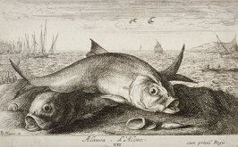 Alausa, L'Alose (The Shad), from Saltwater Fish, Part II