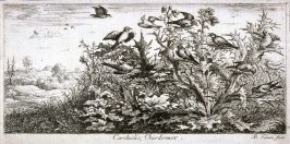 Carduelis, Chardonnet (The Goldfinch), from A Book of Birds