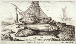 Halec, Le Harang (The Hering), from Salt Water Fish, Part II