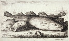 Molucius piscis, La Moruë fraiche (The Young Codfish), from Salt Water Fish, Part II