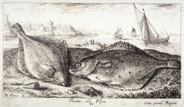 Psetta, La Plye (The Flatfish), from Salt Water Fish, Part II