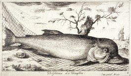 Delphinus, Le Dauphin (The Dolphin), from Salt Water Fish, Part III