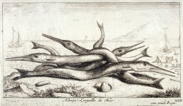 Admos, Lesguille de Mer (The Pipefish), from Salt Water Fish, Part III