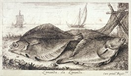 Limanda, La Limande (The Sand Dab), from Salt Water Fish, Part III