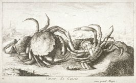 Cancer, Le Cancre (The Crab), from Saltwater Fish, Part I