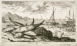 Sarda, La Sardine (The Sardine), from Salt Water Fish, Part I