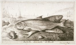 Pulchella, olim trichis, La Pucelle (The Virgin Fish), from Salt Water Fish, Part I