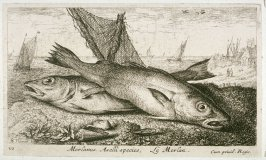 Merlanus, Aselli species, Le Merlan (The Whiting), from Salt Water Fish, Part I