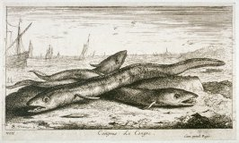 Congrus, Le Congre (The Conger Eel), from Salt Water Fish, Part I