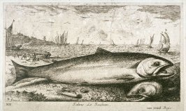 Salmo, Le Saulmon (The Salmon), from Salt Water Fish, Part I