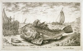 Cuculus, Le Coccu de mer (The Scorpion Fish), from Salt Water Fish, Part I