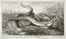 Anguilla, L'Anguille (The Eel), from Fresh Water Fish, Part II