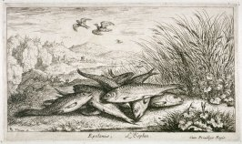 Epelanus, L'Esplan (The Smelt), from Fresh Water Fish. Part II