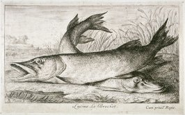 Lucius, Le Brochet (The Pike) , from Fresh Water Fish, Part I