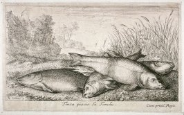 Tinca piscis, La Tanche (The Tench), from Fresh Water Fish, Part I