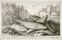 Leuciscus seu Dardus, La Vandoise ou Dard (The Dard), from Fresh Water Fish, Part I