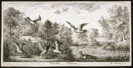 Vanellus, Vanneau (The Lapwing), from A Book of Birds