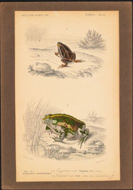 Reptiles (Ergystone, Crapoud), Plate 16 from Dictionary Universelle d'Histoire Naturelle