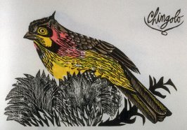 Chingolo: Chingolo Song- Sparrow, seventh plate in the book Birds from my Homeland with notes from W. H. Hudson's Birds of La Plata ([New York: Igal Roodenko,] 1958)