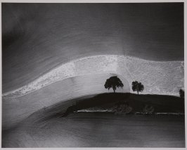 Two Trees on Hill with Shadows, Paso Robles, California