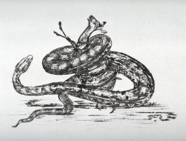 One from Set of 15 lithographic studies of Animals