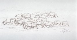 Flock of grazing sheep