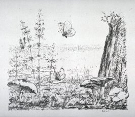 Study of Butterflies, mushrooms and flowers