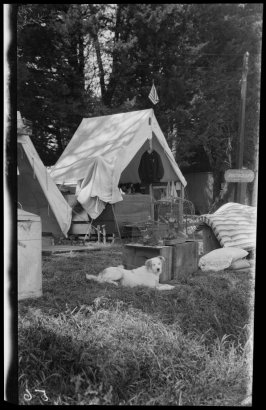 Untitled (Life in a refugee camp. A large reclining dog punctuates the foreground)