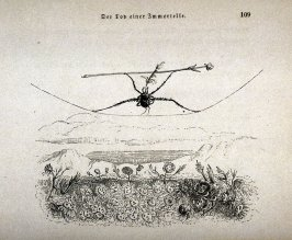 Insect on a Tightrope from Un Autre Monde
