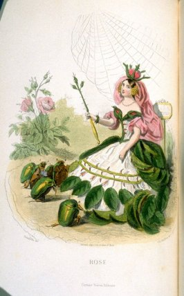 Rose, plate opposite p. 91 in the book, Les Fleurs animées (Paris: Garnier Frères, undated)